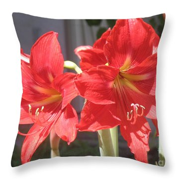 Throw Pillow featuring the photograph Red Amaryllis by Kume Bryant