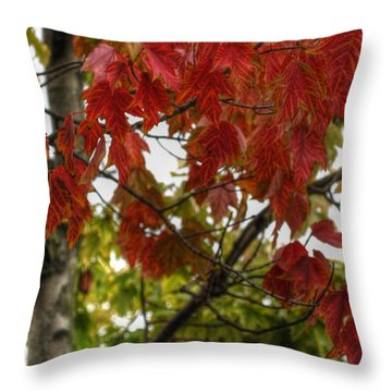 Throw Pillow featuring the photograph Red And Green Prior X-mas by Michael Frank Jr