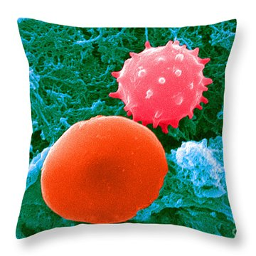 Red And White Blood Cells, Sem Throw Pillow by Science Source