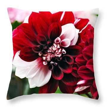 Red And White Variegated Dahlia Throw Pillow by Kaye Menner