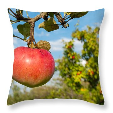 Red Apple On Branch Of Tree Throw Pillow by Matthias Hauser