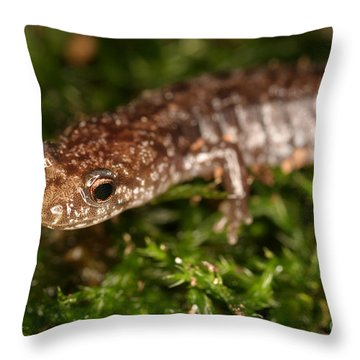 Red-backed Salamander Throw Pillow by Ted Kinsman