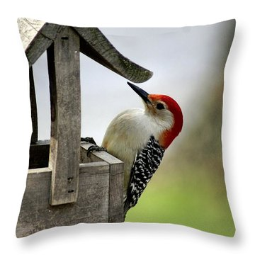 Red Bellied Woodpecker Throw Pillow by L Granville Laird