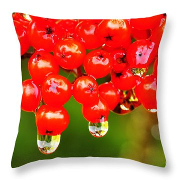 Red Berries And Raindrops Throw Pillow by Thomas R Fletcher