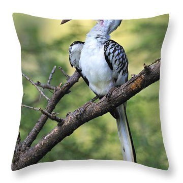 Red-billed Hornbill Throw Pillow