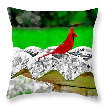 Red Bird In Bath Throw Pillow