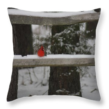 Red Bird Throw Pillow by Stacy C Bottoms