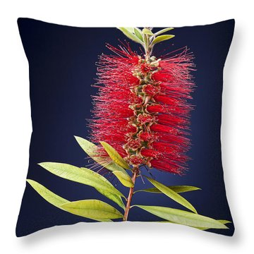 Red Brush Throw Pillow by Kelley King