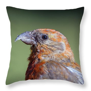 Red Crossbill Throw Pillow