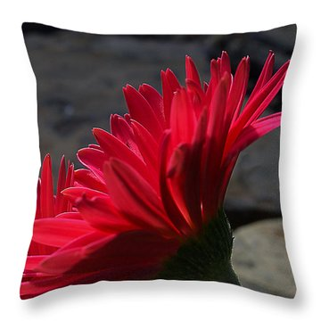 Throw Pillow featuring the photograph Red English Daisy by Joe Schofield