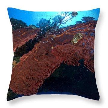 Red Fan Cora With Sunburst, Papua New Throw Pillow by Steve Jones