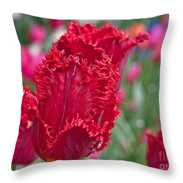 Red Fringed Tulip Flower Macro Art Prints Throw Pillow