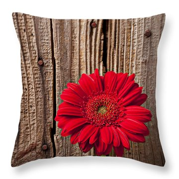 Red Gerbera Daisy With Wooden Wall Throw Pillow by Garry Gay