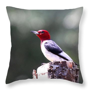 Red-headed Woodpecker - Statue Throw Pillow