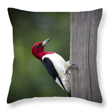 Red Headed Woodpecker Hdr - Artist Cris Hayes Throw Pillow