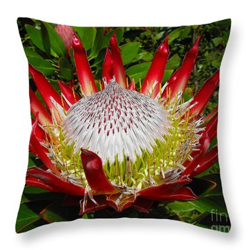 Red King Protea Throw Pillow by Rebecca Margraf