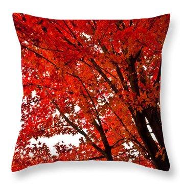 Red Maple Tree Throw Pillow by Kamil Swiatek