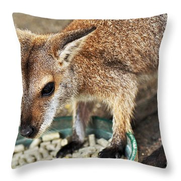 Red-necked Wallaby Throw Pillow by Kaye Menner