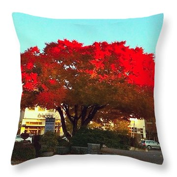 Red Red Maple Tree - Lake Oswego Or Throw Pillow