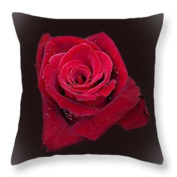 Red Rose II Throw Pillow by Jim Ziemer
