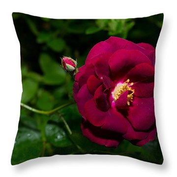 Red Rose In The Wild Throw Pillow