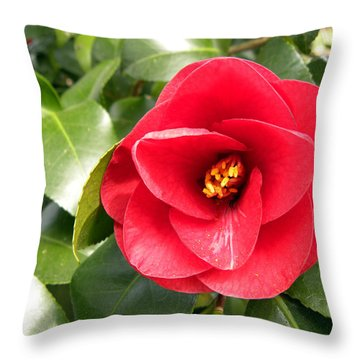 Red Rose Knock Out Throw Pillow by Sandi OReilly