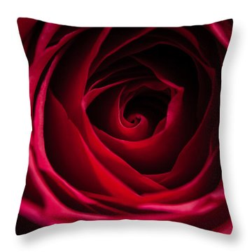 Throw Pillow featuring the photograph Red Rose by Matt Malloy