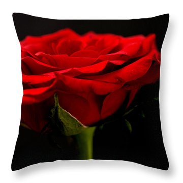 Throw Pillow featuring the photograph Red Rose by Steve Purnell