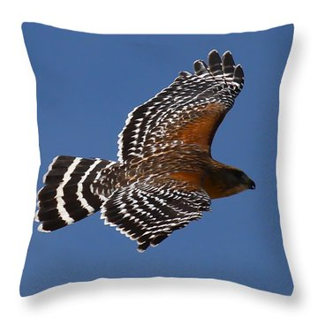 Red-shoulder Hawk Throw Pillow