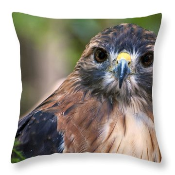 Florida Red Shoulder Hawk  Throw Pillow