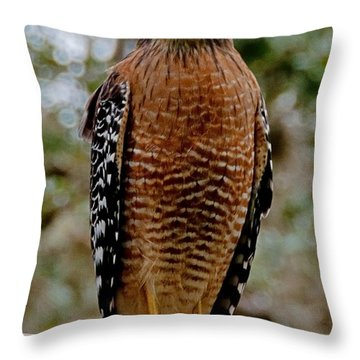Red Shouldered Hawk Throw Pillow by John Black