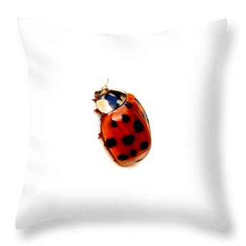 Red Spotted Ladbug White Background Throw Pillow