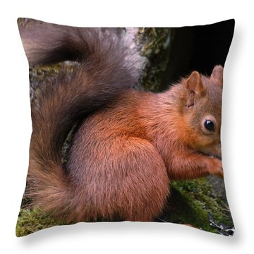 Throw Pillow featuring the photograph Red Squirrel by Lynn Bolt
