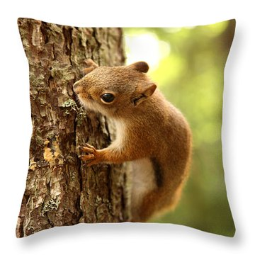 Red Squirrel Throw Pillow by Ted Kinsman