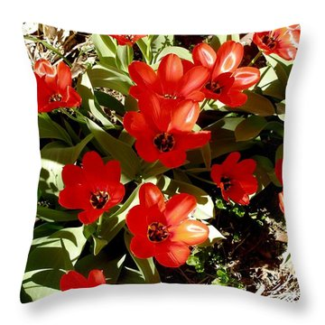Throw Pillow featuring the photograph Red Tulips by David Pantuso