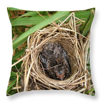 Red-winged Blackbird Baby In Nest Throw Pillow by J McCombie