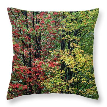 Red Yellow And Green Leaves Throw Pillow