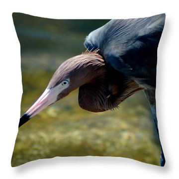 Reddish Egret 2 Throw Pillow