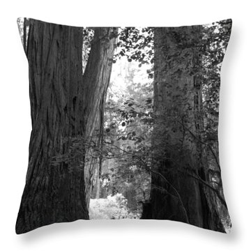 Redwood Pair Throw Pillow by Kathleen Grace
