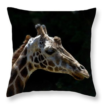 Reflection Time Throw Pillow by Roger Mullenhour