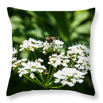 Refractions Throw Pillow