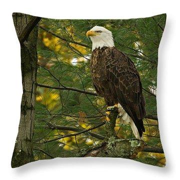 Regal Throw Pillow by Judy  Johnson