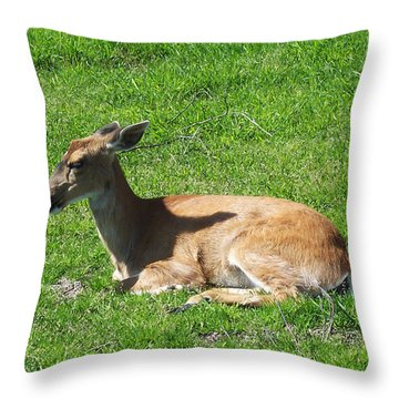 Relaxin Throw Pillow by Aimee L Maher Photography and Art Visit ALMGallerydotcom