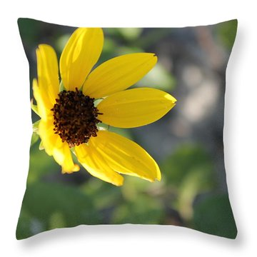 Resting On The Sun Throw Pillow