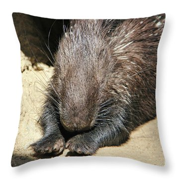 Resting Porcupine Throw Pillow by Mariola Bitner
