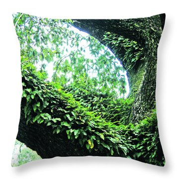 Throw Pillow featuring the photograph Resurrection Fern by Lizi Beard-Ward