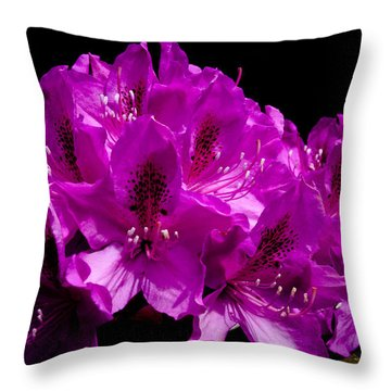 Rhododendron Throw Pillow by David Patterson