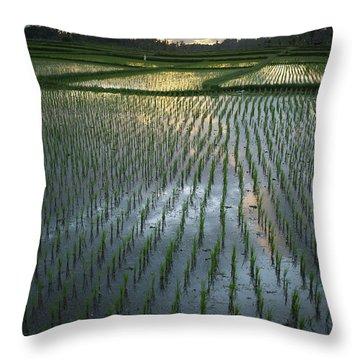 Rice Fields, Near Ubud Bali, Indonesia Throw Pillow by Huy Lam