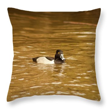 Throw Pillow featuring the photograph Ring Necked Duck by Daniel Hebard