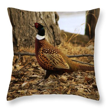 Ring-necked Pheasant Throw Pillow by Alyce Taylor